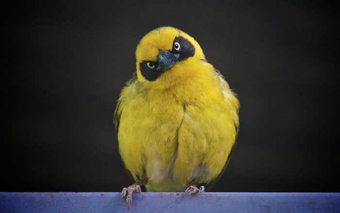 actual real life angry looking birds 6 40 Real Life Angry Birds