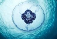 30 Breathtaking Undersea Photos by Alexander Semenov