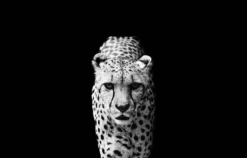 black and white animal portraits square nicolas evariste 1 Touching Portraits of Elderly Animals