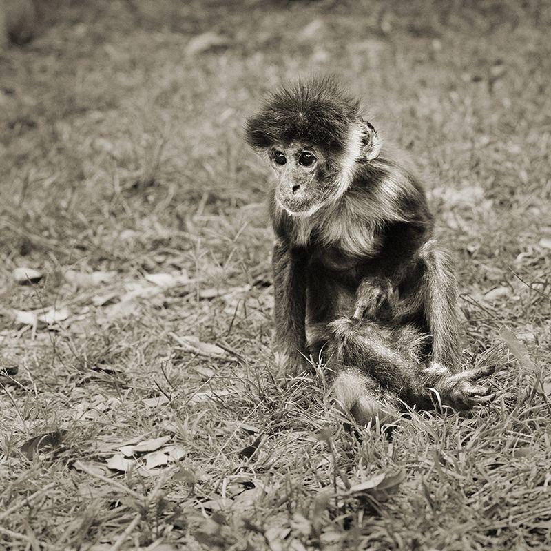 capuchin monkey 30 plus elderly animals isa leshko Touching Portraits of Elderly Animals