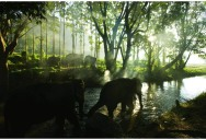 Picture of the Day: Elephant Herd in Chiang Mai, Thailand