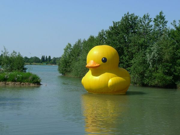 giant inflatable rubber ducky florentijn hofman elst netherlands 1 The World Travels of a Giant Rubber Duck