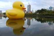 The World Travels of a Giant Rubber Duck