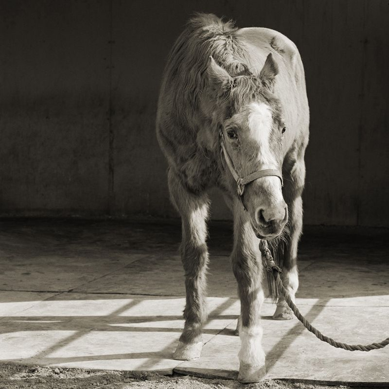 handsome one 33 thoroughbred horse elderly animals isa leshko Talented Teen Shoots Adorably Creative Dog Portraits