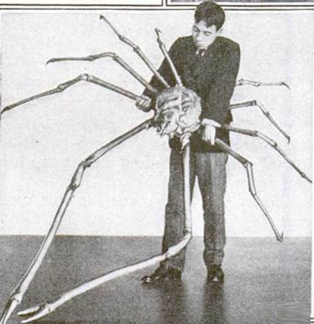 japanese spider crab 15 of the Largest Animals in the World