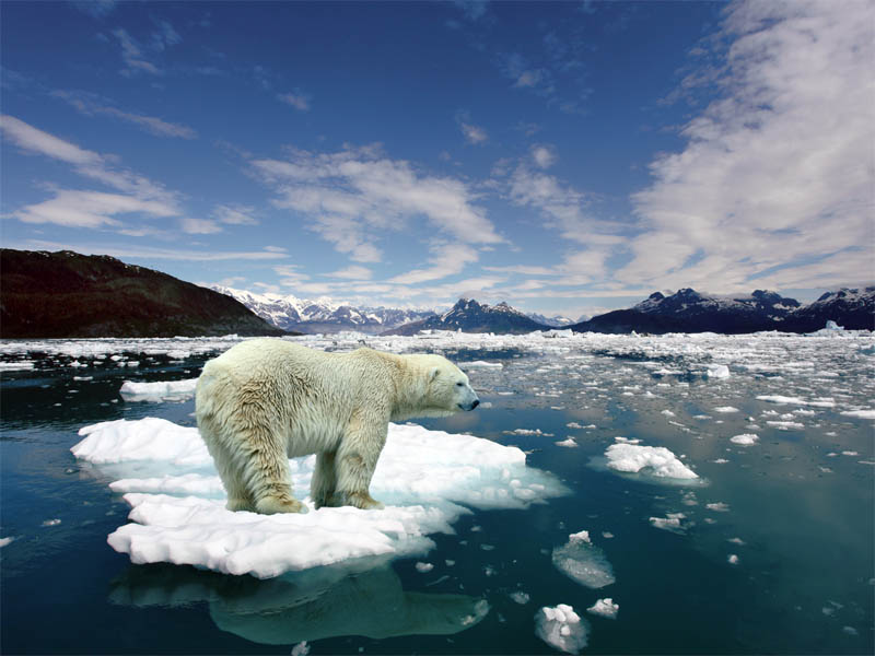 polar bear 15 of the Largest Animals in the World