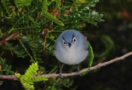 40 Real-Life Angry Birds