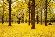 Picture of the Day: Autumn in Yoyogi Park, Tokyo