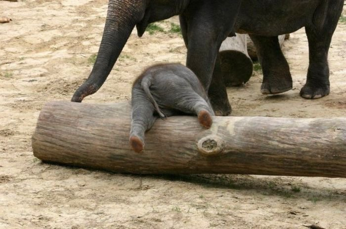 adorable baby elephant 12 The 35 Cutest Baby Elephants You Will See Today