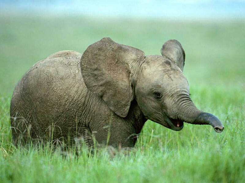 adorable baby elephant 4 The 35 Cutest Baby Elephants You Will See Today