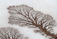 Picture of the Day: Fractal Patterns in Dried Out Desert Rivers