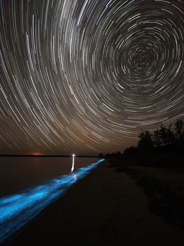 bioluminescence gippsland lakes australia phil hart 2008 2009 6 The Great Bioluminescence of 2009