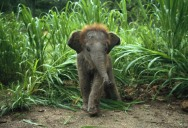 The 35 Cutest Baby Elephants You Will See Today