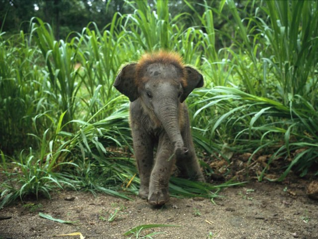 The 35 Cutest Baby Elephants You Will See Today » TwistedSifter