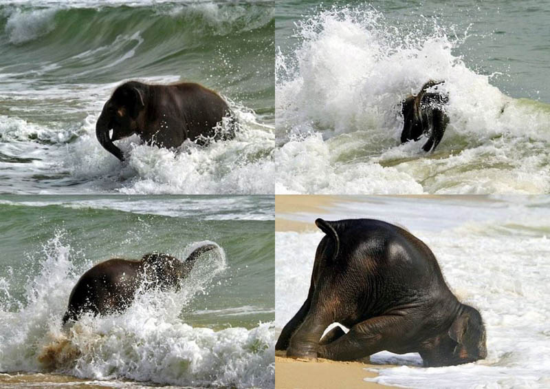 cute baby elephant 8 The 35 Cutest Baby Elephants You Will See Today