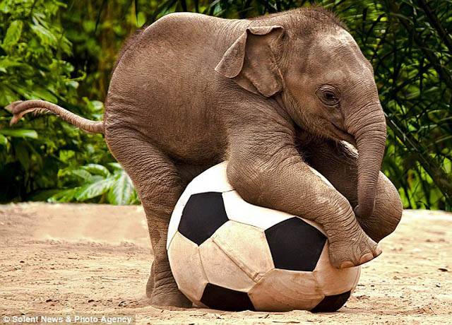 cute baby elephant 9 The 35 Cutest Baby Elephants You Will See Today