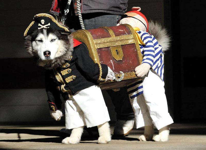dog pirate costume funny The Shirk Report   Volume 162