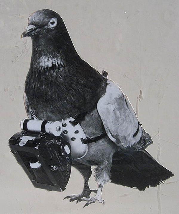 dr julius neubronner pigeon camera pigeon photography The History of Pigeon Camera Photography