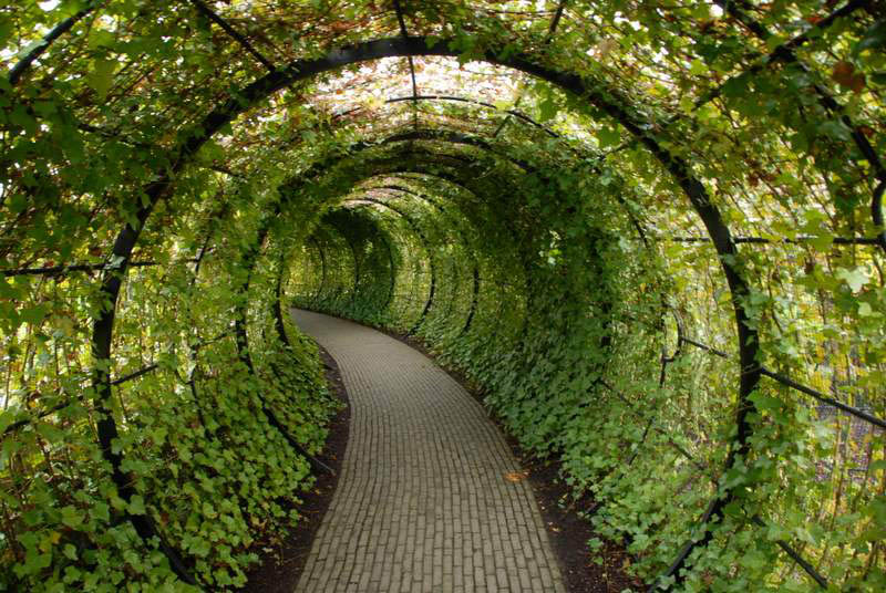 green ivy tunnel alnwick poison garden Picture of the Day: A Tunnel Made of Ivy