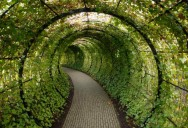 Picture of the Day: A Tunnel Made of Ivy