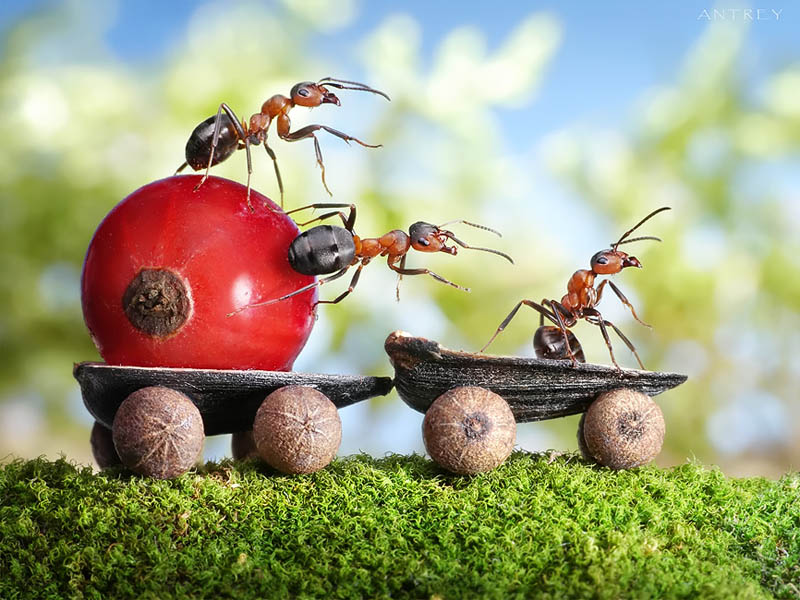 real ants in fantasy settings landscapes andrey pavlov 14 Surreal Self Portraits by Kyle Thompson