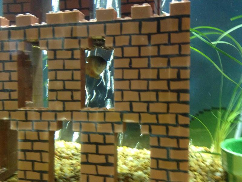 super mario fish tank aquarium 5 This Super Mario Fish Tank is Awesome