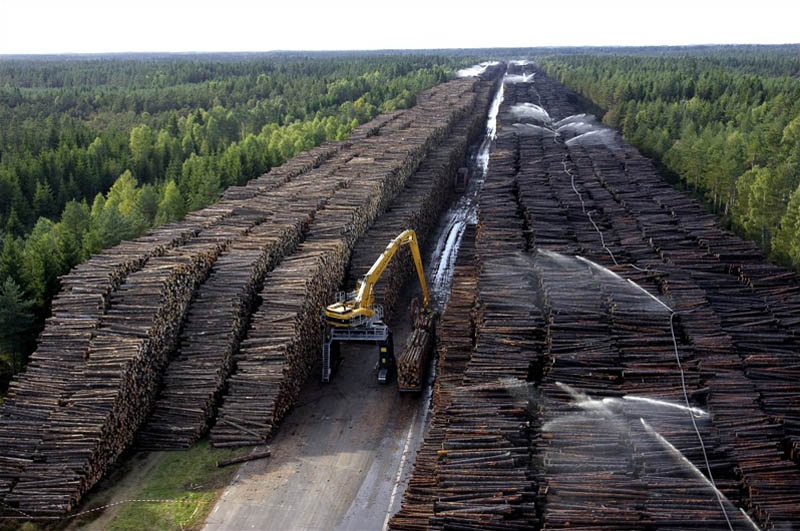 worlds largest stockpile of wood denmark sweden gudrun cyclone byholma Picture of the Day: The Worlds Largest Stockpile of Wood