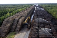 Picture of the Day: The World's Largest Stockpile of Wood