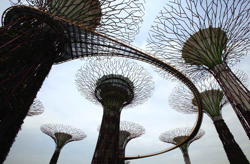 people walk on the supertree aerial walkway that links the giant concrete supertrees at Gardens by the Bay in Singapore