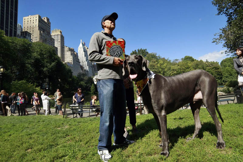 giant george receiving guiness world record for tallest dog