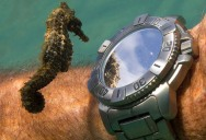 Picture of the Day: A Seahorse Inspects a Diver's Watch