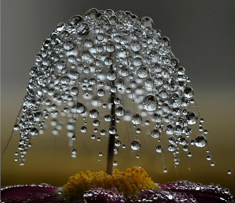 dewdrops on a flower pistil look like a miniature tree when shot close up