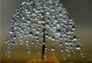 Picture of the Day: Miniature Dewdrop Tree
