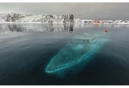 Picture of the Day: A Sunken Boat in the Antarctic