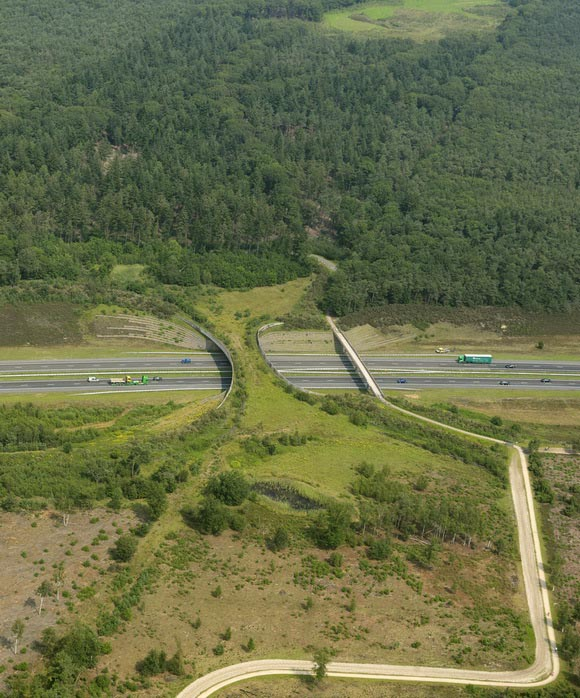 the borkeld netherlands animal bridge wildlife crossing overpass 12 Amazing Animal Bridges Around the World