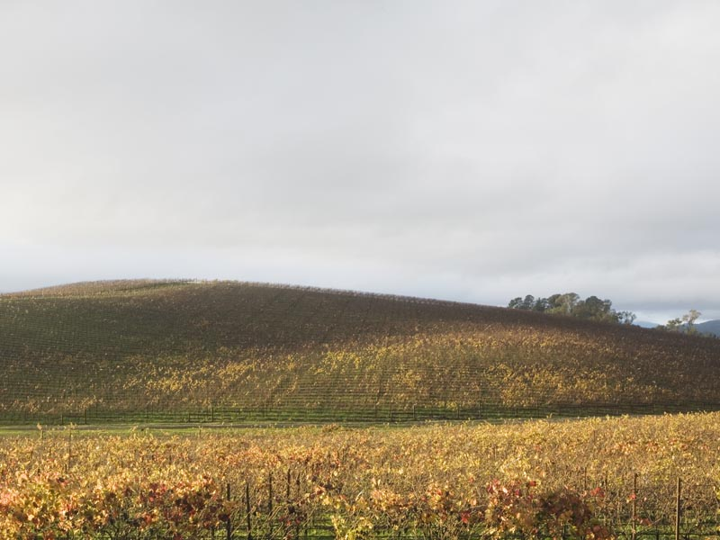 what bliss photo looks like in 2006 now a vineyard covers the famous green hill of windows xp wallpaper