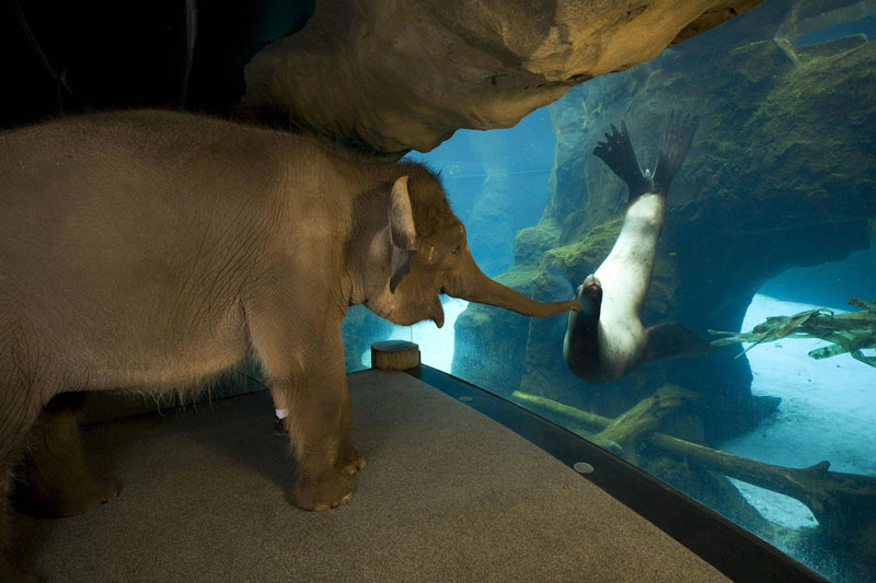 an elephant meets a sea lion Picture of the Day: An Elephant Meets a Sea Lion