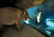 Picture of the Day: An Elephant Meets a Sea Lion