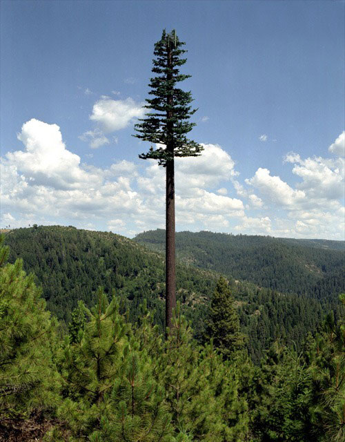 cell phone tower disguised as a tree 1 25 Cell Phone Towers Disguised to Look Like Something Else