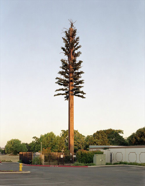 cell phone tower disguised as a tree 9 25 Cell Phone Towers Disguised to Look Like Something Else