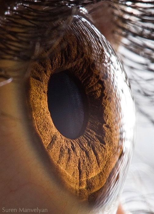 extreme close up of human eye macro suren manvelyan 1 21 Extreme Close Ups of the Human Eye