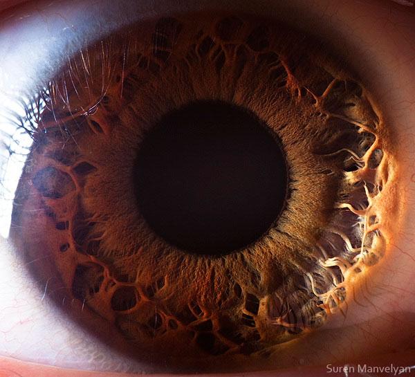 extreme close up of human eye macro suren manvelyan 11 21 Extreme Close Ups of the Human Eye