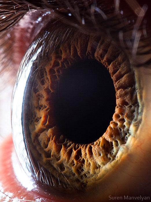 extreme close up of human eye macro suren manvelyan 12 21 Extreme Close Ups of the Human Eye