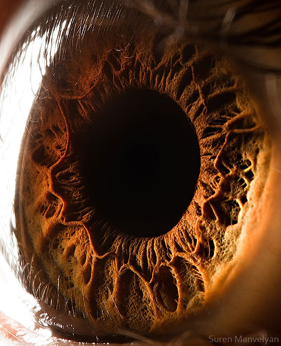 extreme close up of human eye macro suren manvelyan 17 Gigantic Human Organs Made from Glass