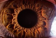 21 Extreme Close Ups of the Human Eye