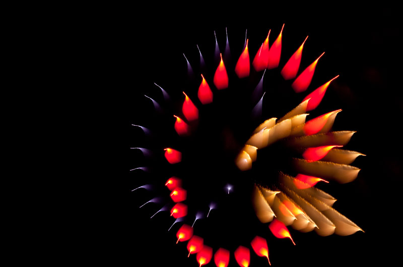 long exposure fireworks like youve never seen before david johnson 3 Long Exposure Fireworks Like Youve Never Seen