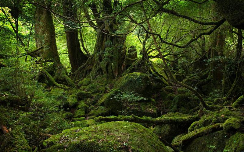 moss covered forest of yakushima island japan 1 Picture of the Day: The Moss Covered Forest of Yakushima