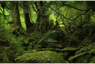 Picture of the Day: The Moss Covered Forest of Yakushima