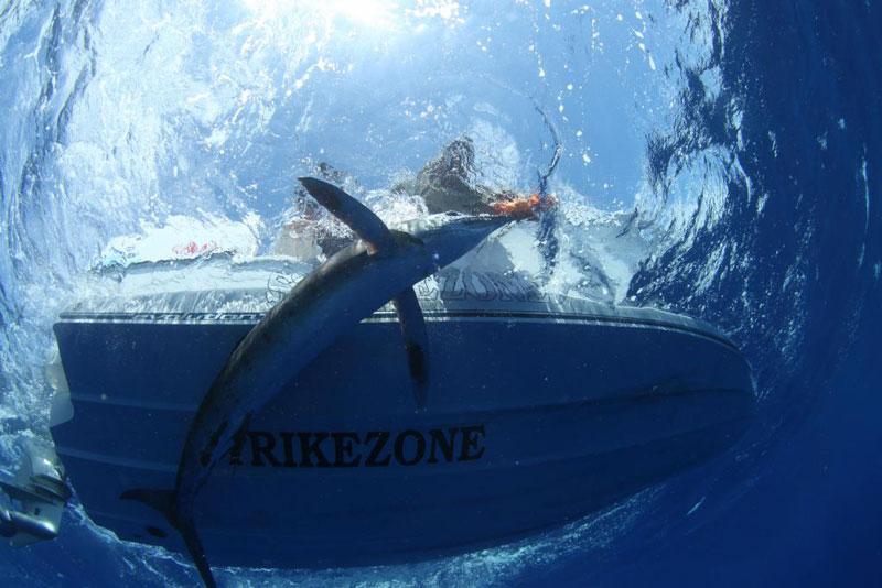 underwater photos of mako shark attacking marlin 2 Rare Underwater Photos of a Shark Attacking a Marlin