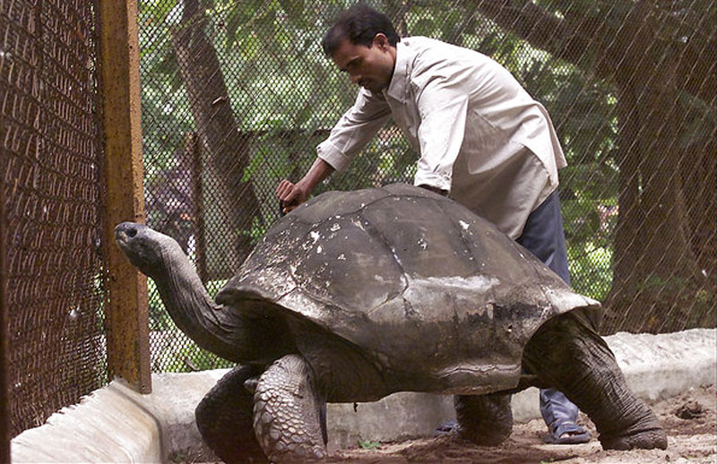 adwaita aldabra tortoise oldest in the world These are Some of the Oldest Living Things in the World